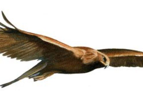 """Vol libre, vol à voile et rapaces, le ciel en partage"""" – 26 OCTOBRE 19h Salle Charvet -Saint-Jean de la Porte"""